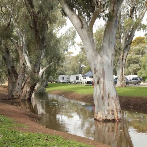 Caravan Park After the Rain 4